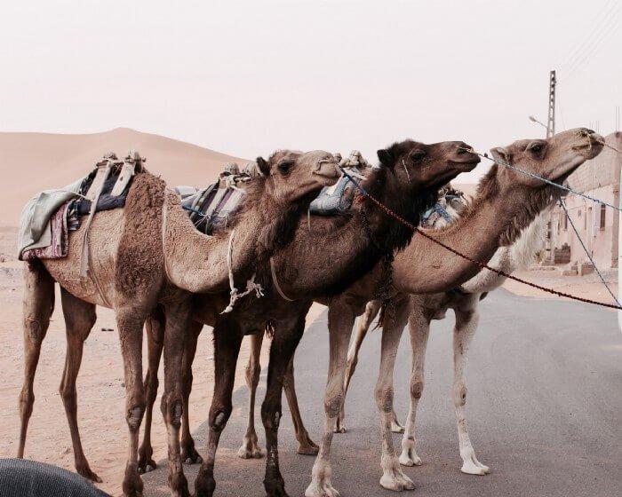 مصطلح Camel Case